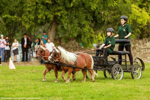 Karpatia Pony Show 2017. Program, concursuri și bilete