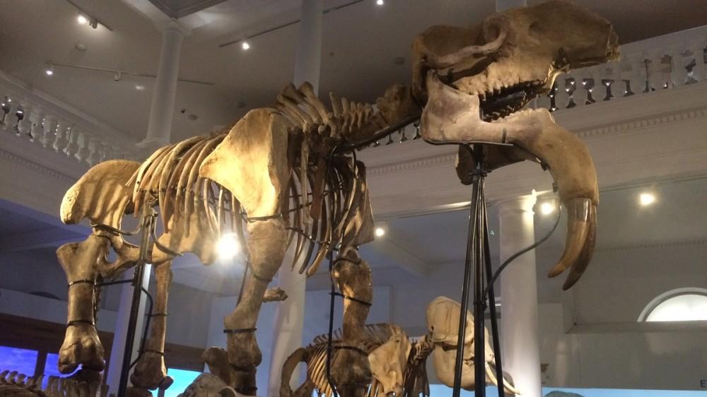 Muzeul Antipa, program special de vizitare în perioada 11 - 15 august