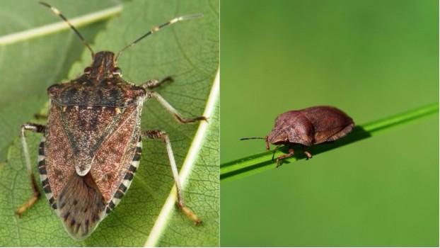 După tigrul platanului, Bucureștiul și împrejurimile au fost invadate de alte insecte greu de exterminat. Cum poți scăpa de disconfortul produs de acestea?