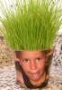 Când se pune grâul la încolțit pentru Sfântul Andrei? Idei pentru copii