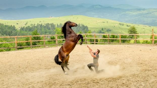 Karpatia Horse Show 2018, 3 zile de competiție, aventură și dischis pe Domeniul Cantacuzino de la Florești